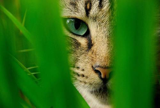 Conversion Killer Cat that Stalks Your Landing Pages