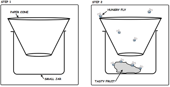 fruit-fly-trap