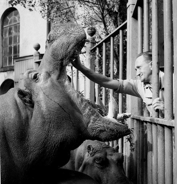 the hippos are running the asylum