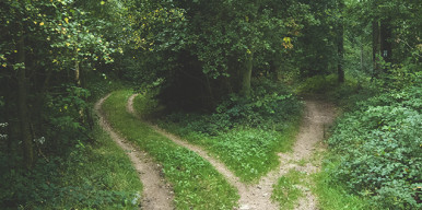 shortcut in woods