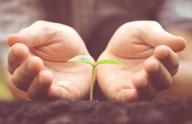 Nurturing seeds