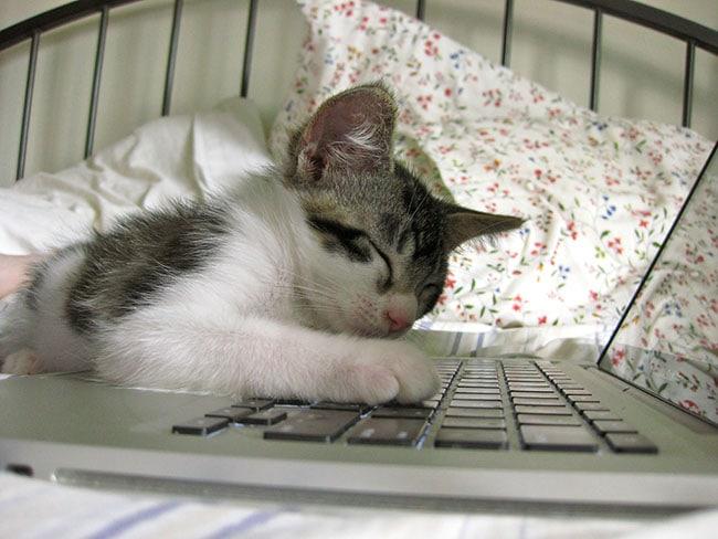 social-media-followers-asleep